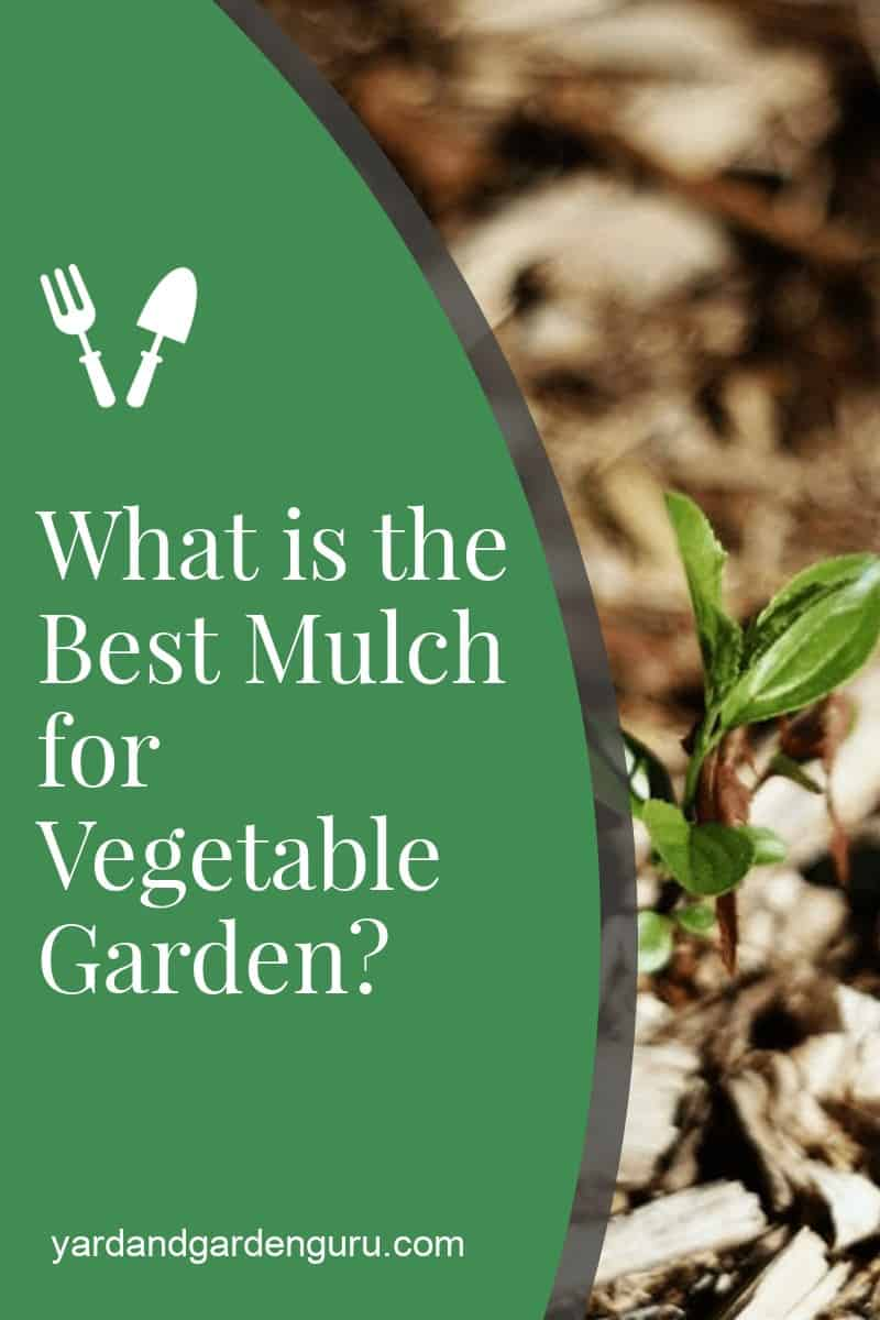 What is the Best Mulch for Vegetable Garden
