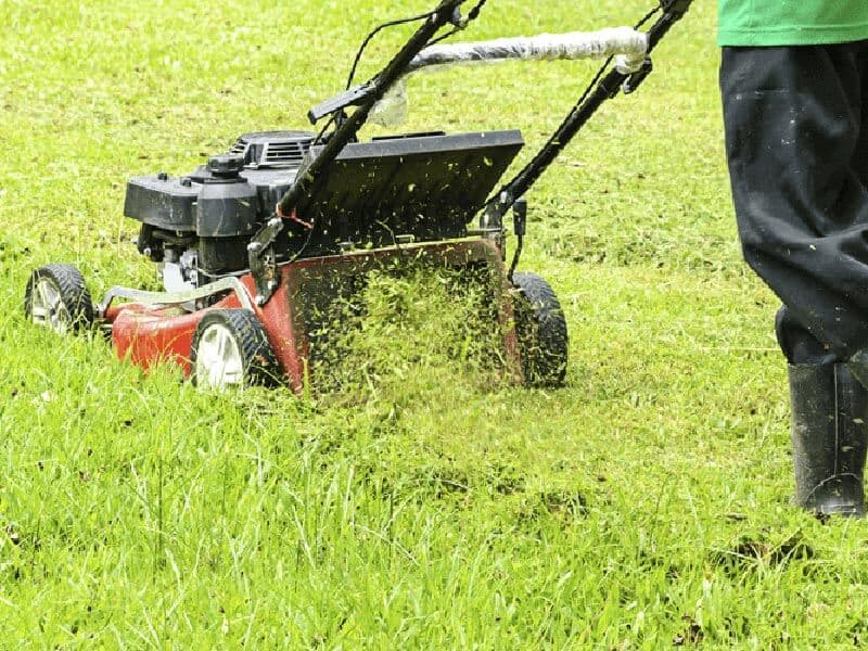 guide in buying lawn mower