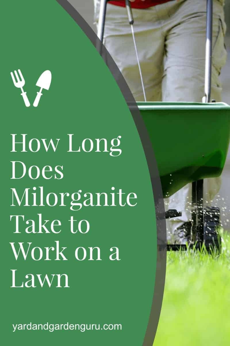How Long Does Milorganite Take to Work on a Lawn