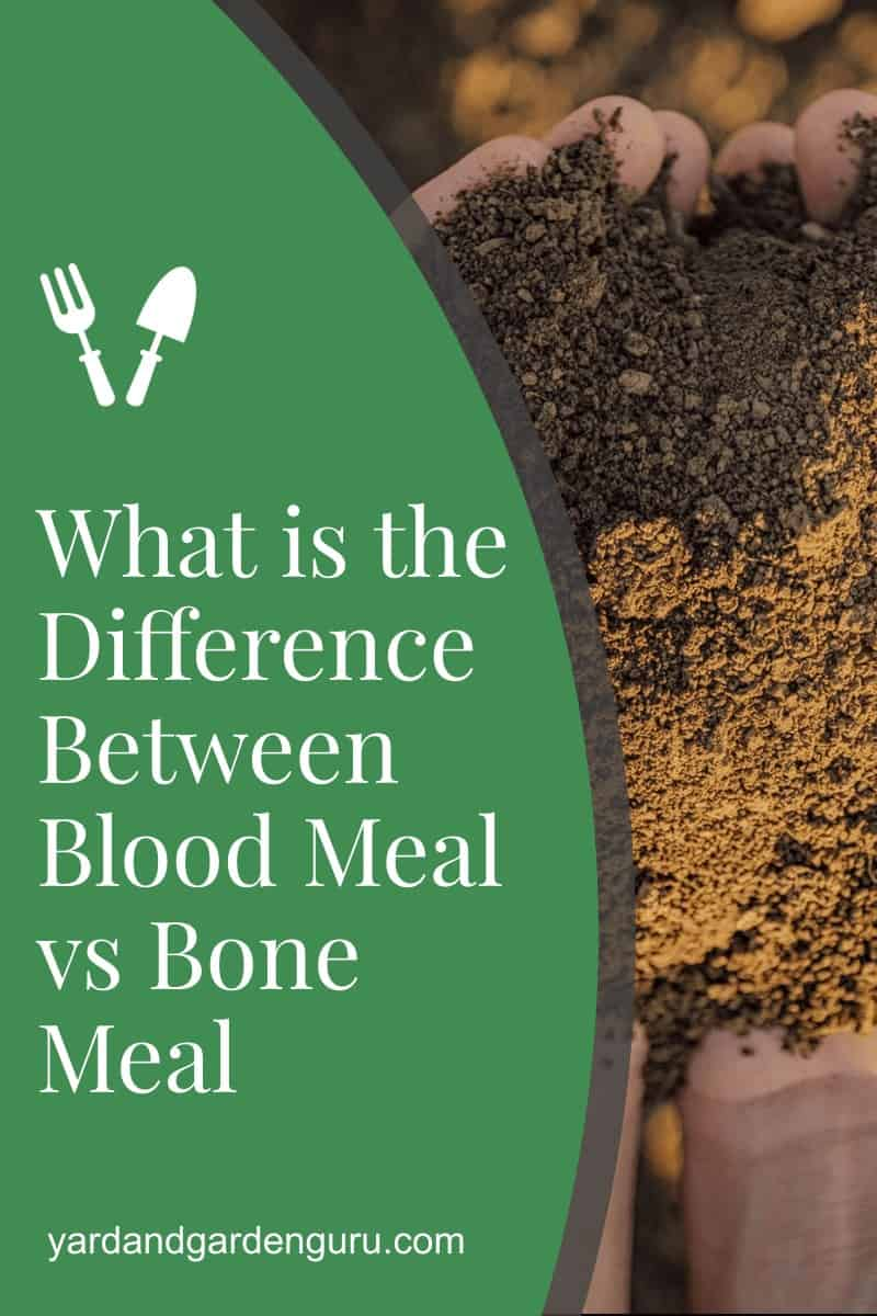 What is the Difference Between Blood Meal vs Bone Meal