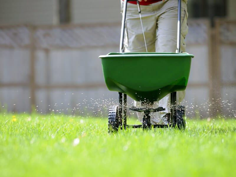 After Dethatch a Lawn you can Add Fertilizer