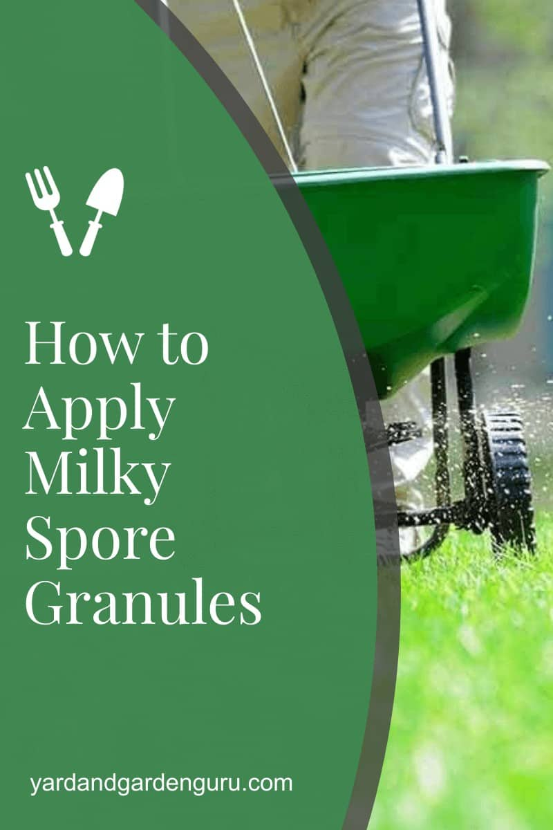 How to Apply Milky Spore Granules