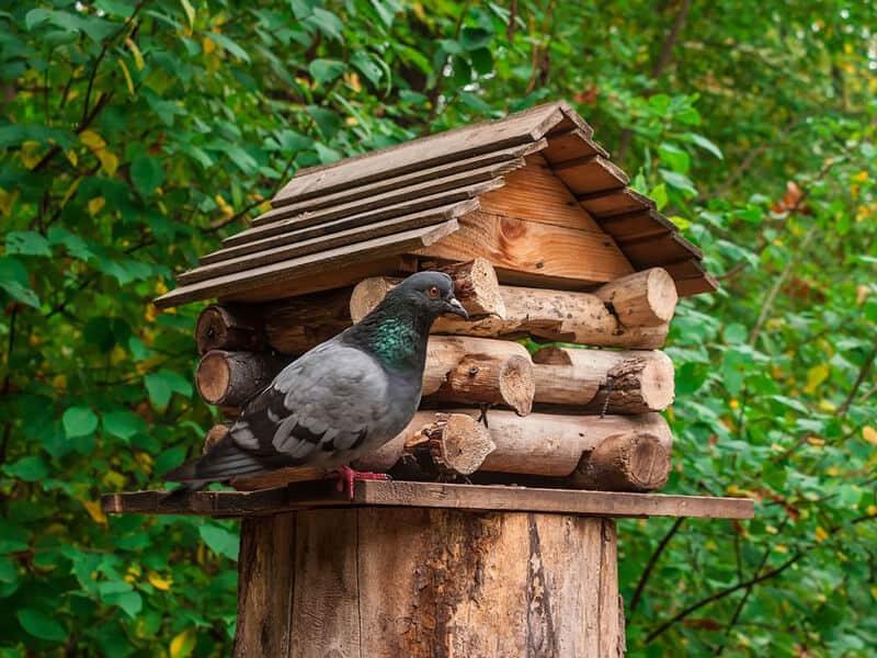 Stump Birdhouse