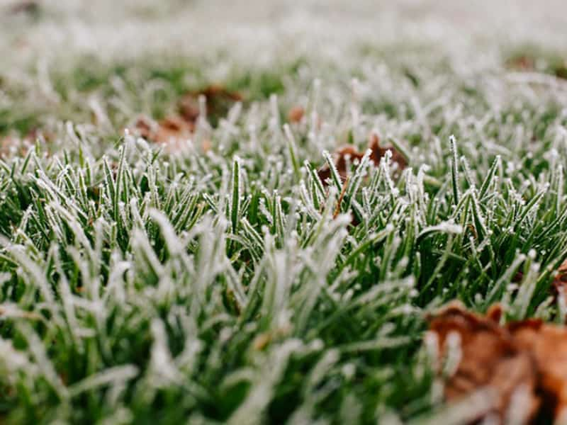 Winterizing Your Lawn