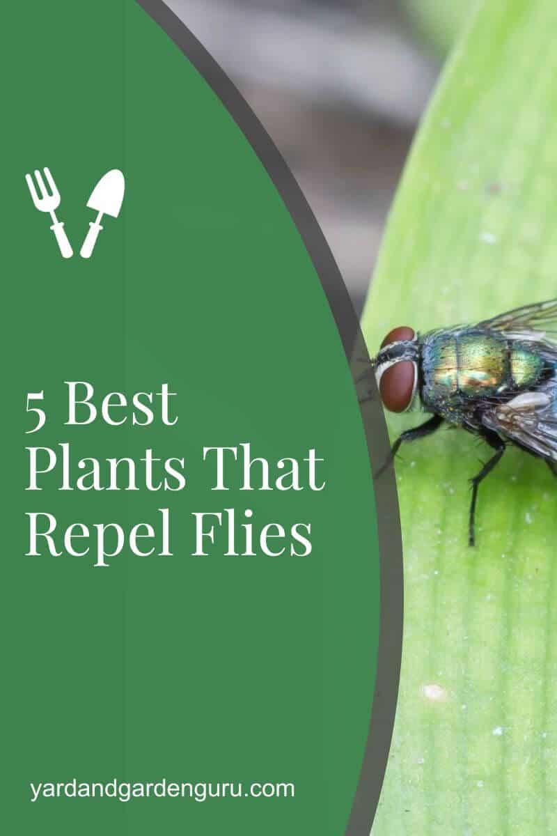 5 Best Plants That Repel Flies