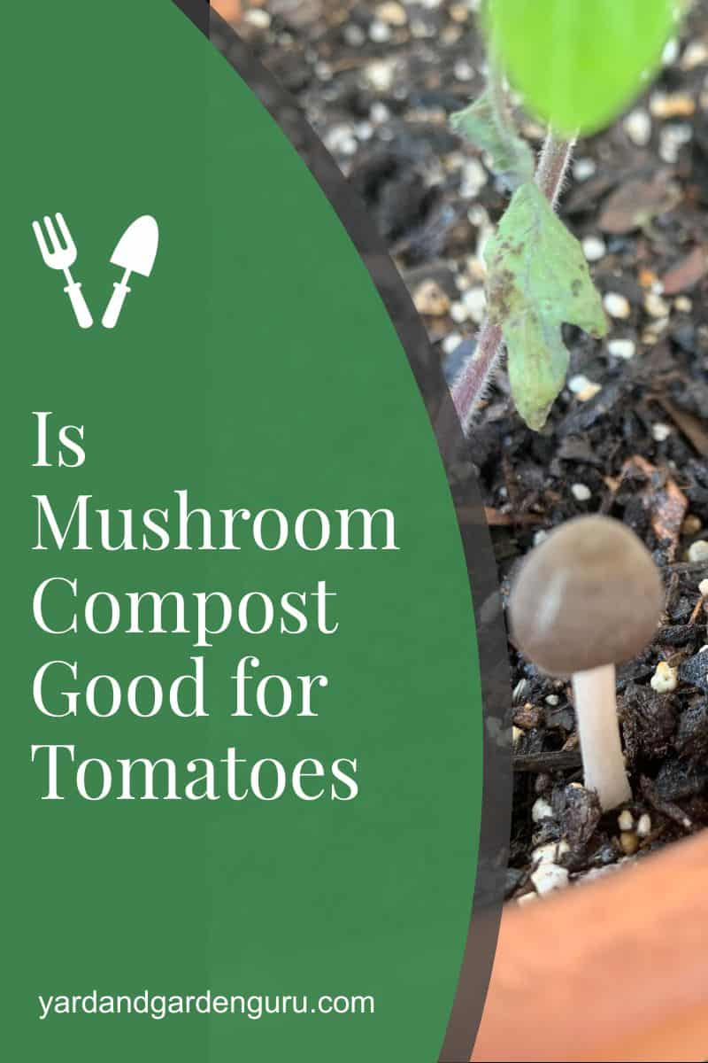 Is Mushroom Compost Good for Tomatoes