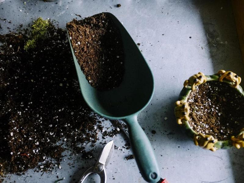 Organic Gardening for Tomatoe