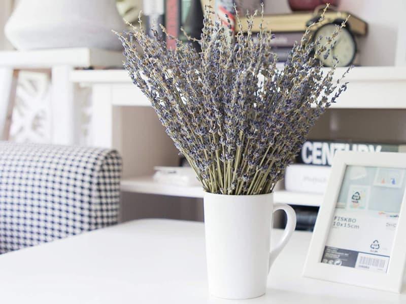 Timoo Dried Lavender Bundles 100% Natural Dried Lavender Flowers for Home Decoration, Photo Props, Home Fragrance, 2 Bundles Pack
