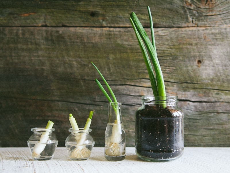 Growing Green Onions Guide