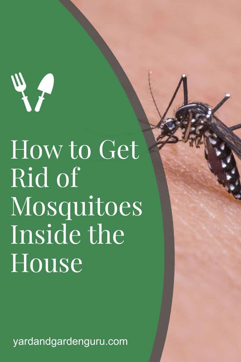 How to Get Rid of Mosquitoes Inside the House