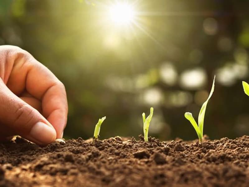 Planting Zone for Gardening