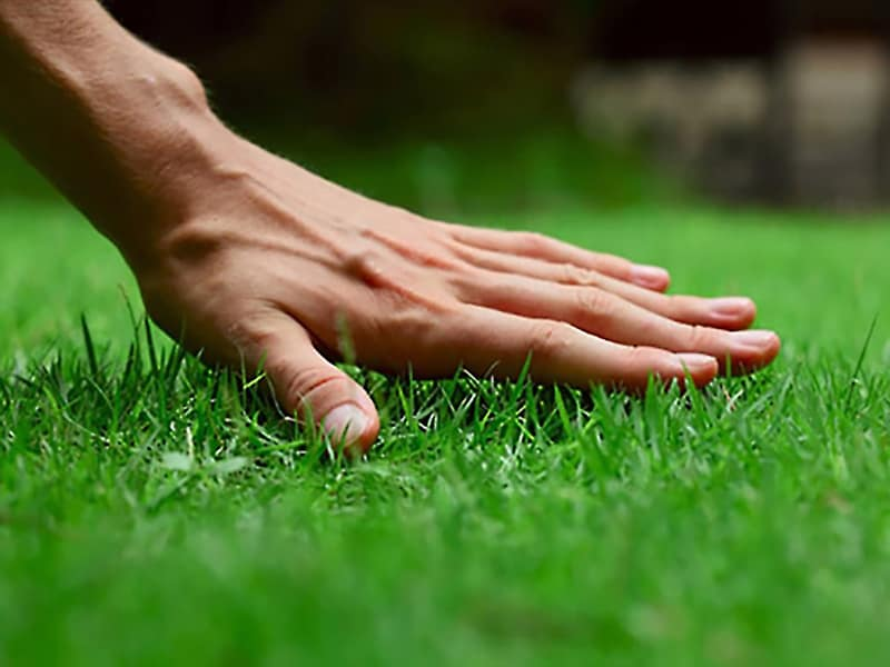 Best Lawn Care Tips for Green Grass