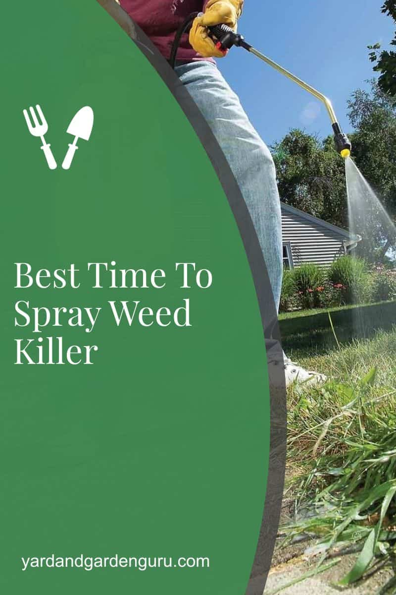Best Time To Spray Weed Killer