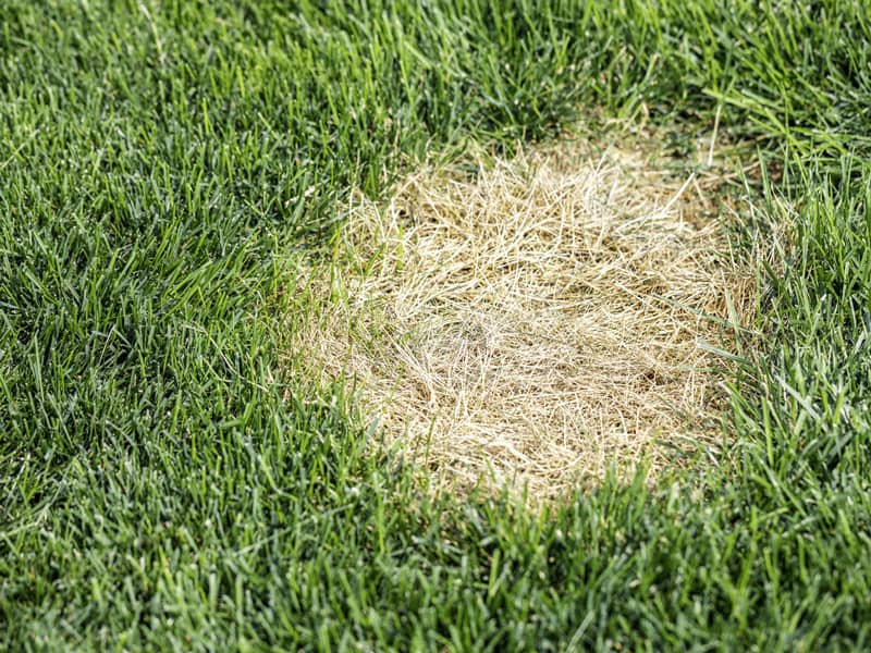 Brown Patches in Lawn