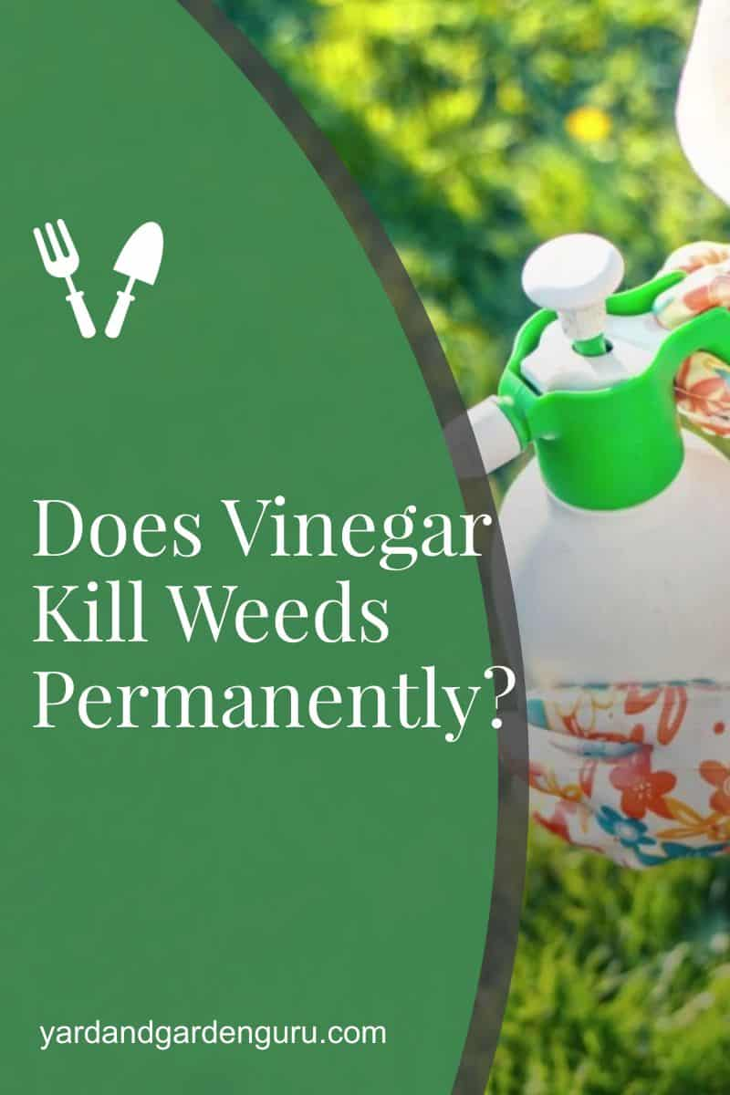 Does Vinegar Kill Weeds Permanently