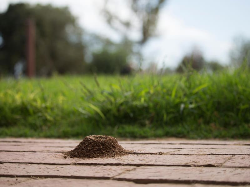 Get Rid of Ants Fast