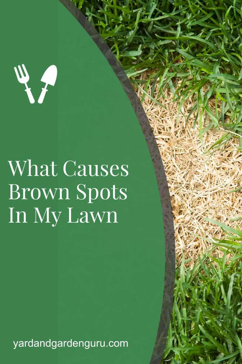 What Causes Brown Spots In My Lawn