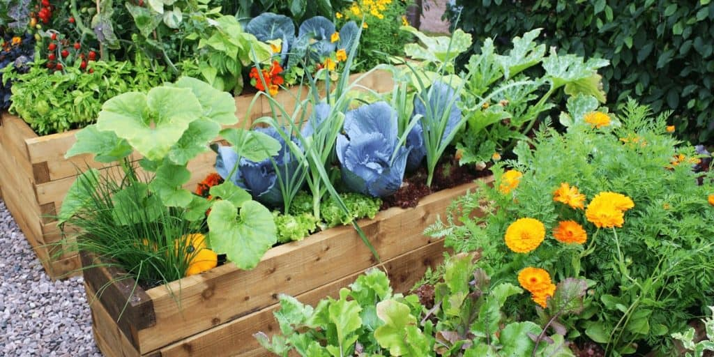 5 Best Vegetables That Grow In Full Shade