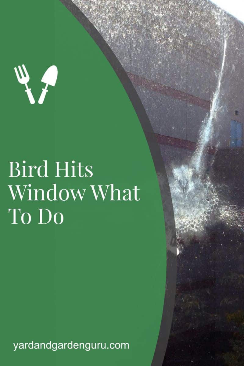 Bird Hits Window What To Do
