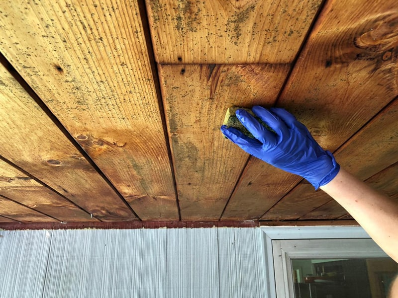 Clean Mold from Wood Safely