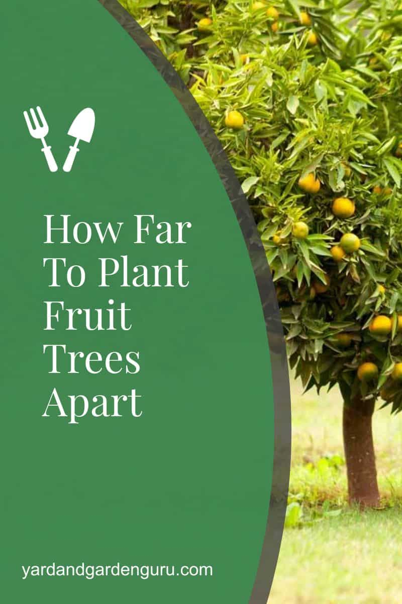 How Far To Plant Fruit Trees Apart
