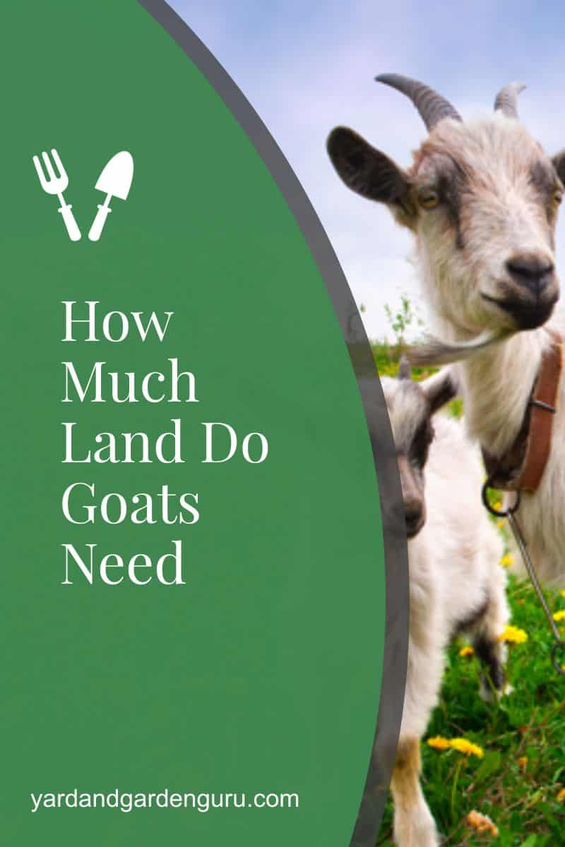 How Much Land Do Goats Need