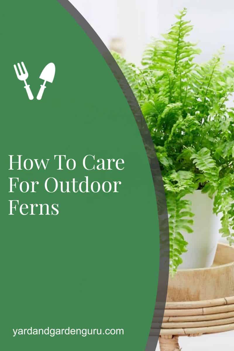How To Care For Outdoor Ferns