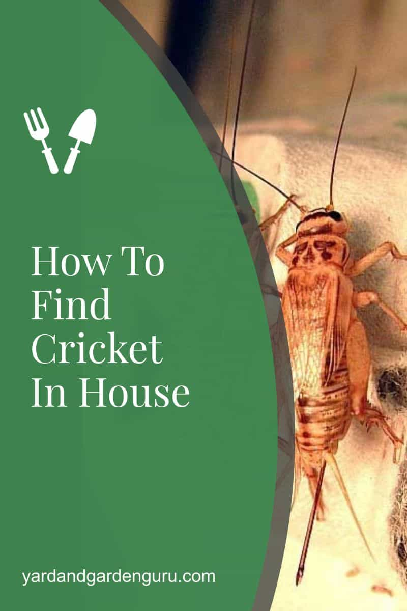 How To Find Cricket In House