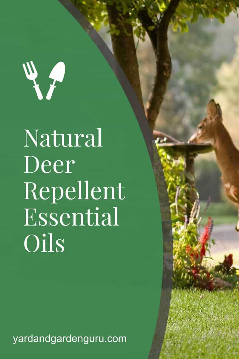 Natural Deer Repellent Essential Oils