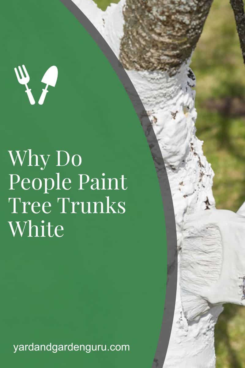 Why Do People Paint Tree Trunks White