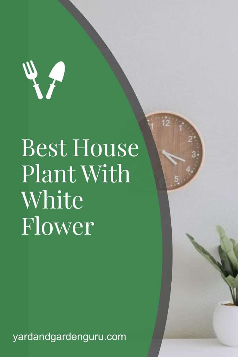 Best House Plant With White Flower