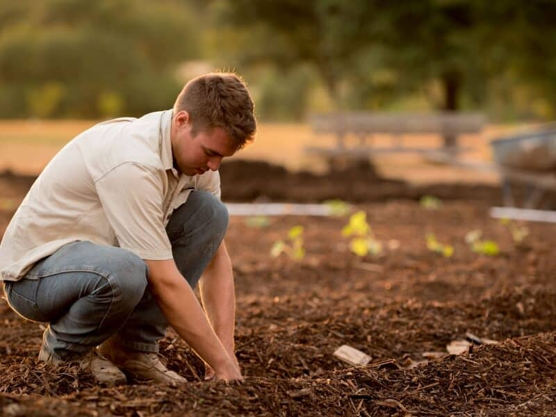 Man planting in the ground