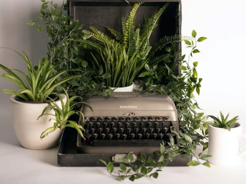 Spider plant in a typewriter