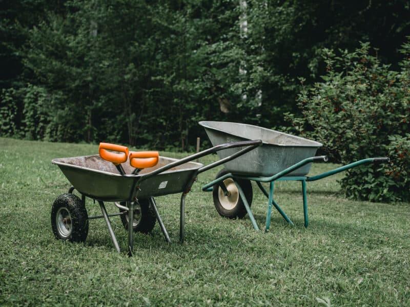 Two wheelbarrows and two orange shovels