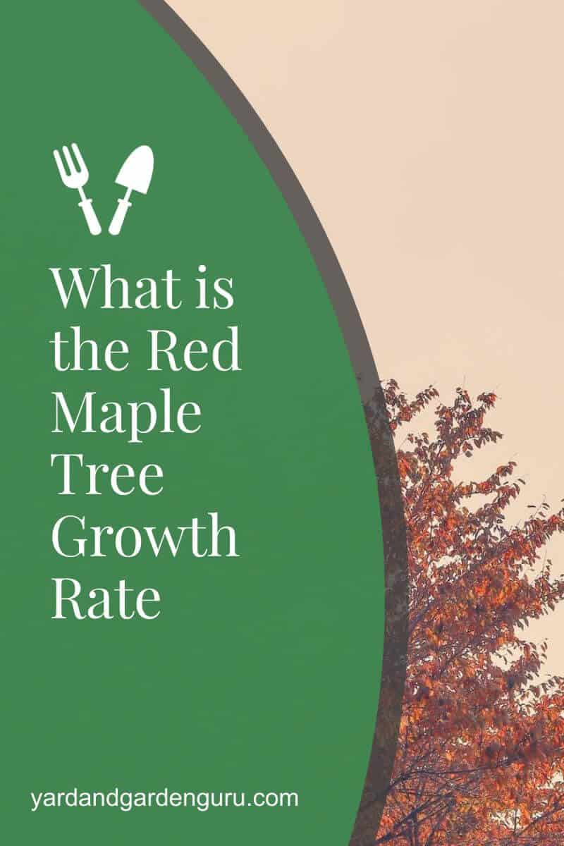 What is the Red Maple Tree Growth Rate
