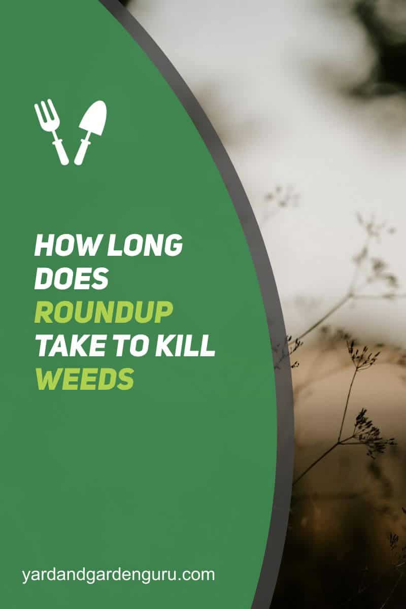 How Long Does Roundup Take To Kill Weeds