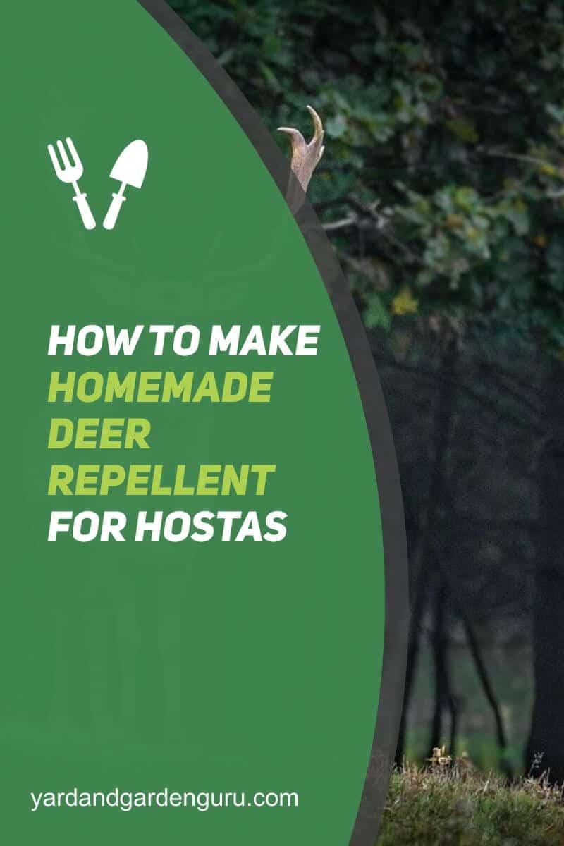 How to Make Homemade Deer Repellent For Hostas