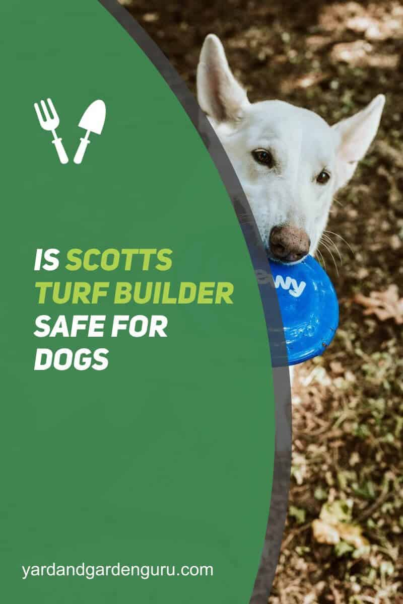Is Scotts Turf Builder Safe For Dogs