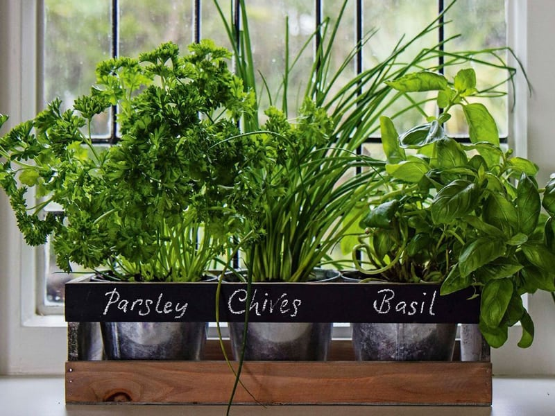 Styling Requirements for Window Sill Herb Garden Kit