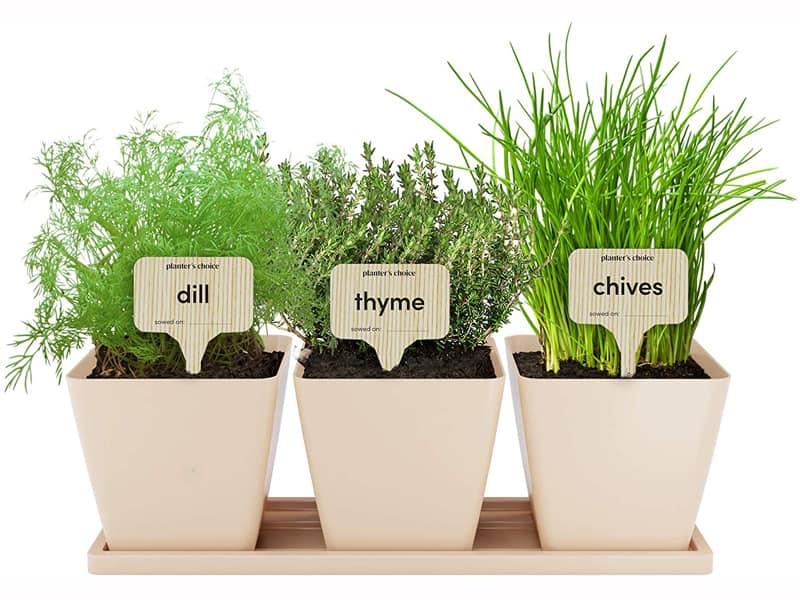 Window Sill Herb Garden Kits Buying Tips