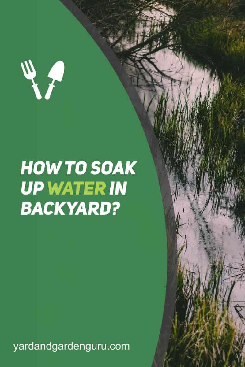 How To Soak Up Water In Backyard (2)