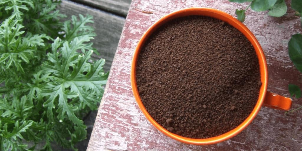 Are Coffee Grounds Good For Tomato Plants