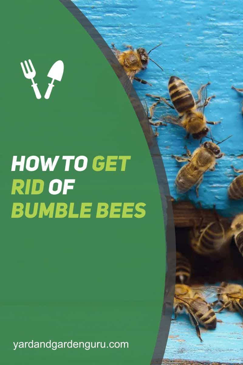 How To Get Rid Of Bumble Bees