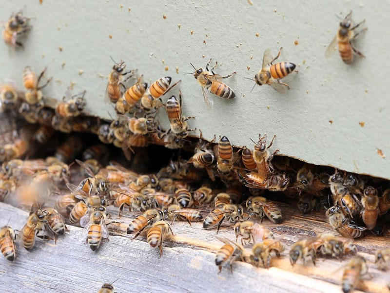 Methods to Repel Bees